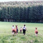 AlpakaLauf_Wald